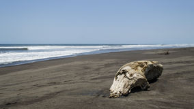 Tronco na praia Imagens de Stock Royalty Free