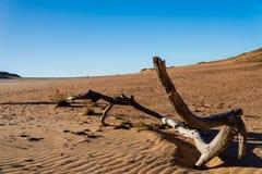 Tronco nella sabbia Fotografia Stock Libera da Diritti
