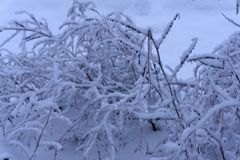 Tronco nevado del arbusto de Frost en la tierra helada foto de archivo