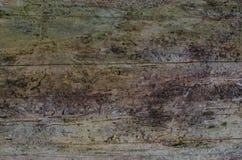 Tronco nocivo di un albero di abete Tronco di albero dell'abete senza corteccia fotografie stock