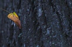 Tronco otoñal de la hoja y de árbol Fotografía de archivo libre de regalías