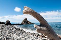 Tronco, praia e mar Fotos de Stock