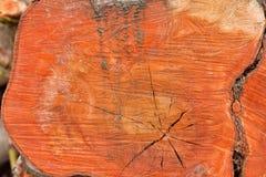Tronco rojo Imagen de archivo libre de regalías
