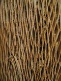 Tronco seco del plátano Imagen de archivo libre de regalías