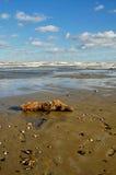 Tronco sobre a praia Fotos de Stock Royalty Free