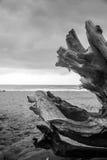 Tronco solo en la playa en un día nublado Fotos de archivo