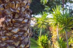 Tronco strutturato della palma ai precedenti tropicali della foresta Armonia i Fotografia Stock