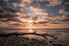 Tronco sulla riva del Mar Baltico Fotografia Stock