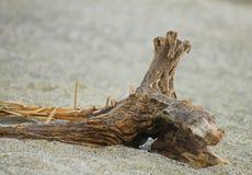 Tronco sulla sabbia Immagini Stock
