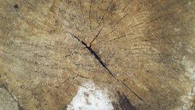 Tronco. Trunk. Tronco cortado dejando ver su diseño interior. Cut trunk letting you see its interior design Stock Images