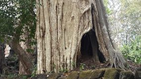 Tronco viejo en Kor Ker Area 1 Imagen de archivo libre de regalías