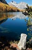 Tronco viejo - lago Palpuogna Foto de archivo
