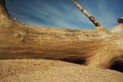 Tronco y arena secos, viejos Fotos de archivo