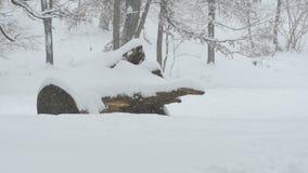 Tronco y bosque que nievan metrajes