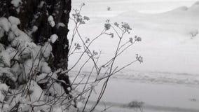 Tronco y malas hierbas de árbol a lo largo del borde y del camino del bosque almacen de metraje de vídeo