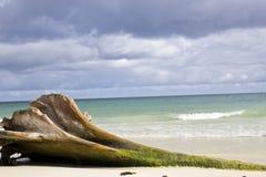 Tronco y mar Fotos de archivo