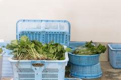 Tronco y raíces japoneses recién cosechados de la planta del wasabi con las hojas Fotos de archivo