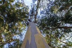 Tronco y top de árbol foto de archivo