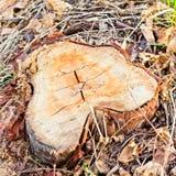 Troncone dell'albero, disboscamento, albero del cuore Immagini Stock Libere da Diritti