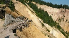 Troncone dell'albero sull'orlo di un burrone Fotografie Stock Libere da Diritti