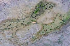 Troncone della sigaretta su fango Fotografia Stock Libera da Diritti