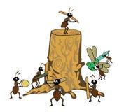 Troncone e formiche Fotografia Stock Libera da Diritti