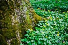 Troncone nell'erba verde Fotografia Stock