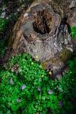 Troncone nell'erba verde Fotografia Stock Libera da Diritti