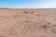 Tronconi petrificati dell'albero sul lago, Kuyalnik, Ucraina immagini stock libere da diritti