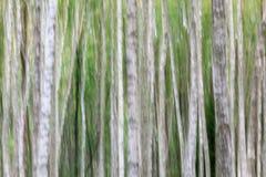 Árbol de abedul abstracto Fotos de archivo