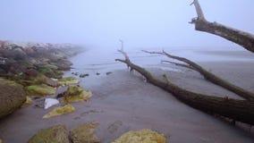 Troncos das árvores na praia na névoa vídeos de arquivo