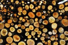 Troncos de árbol Foto de archivo