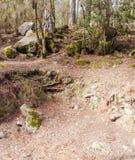 Troncos de árbol Imagen de archivo