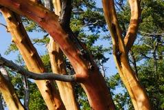 Troncos de árbol Imágenes de archivo libres de regalías