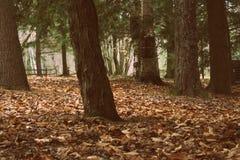 Troncos de árbol Fotografía de archivo
