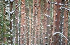 Troncos de árbol Fotos de archivo