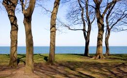 Troncos de árbol atractivos Foto de archivo libre de regalías