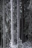 Troncos de árbol con escarcha Imágenes de archivo libres de regalías