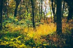 Troncos de árbol con la hierba y las hojas amarillas en bosque del otoño Foto de archivo libre de regalías