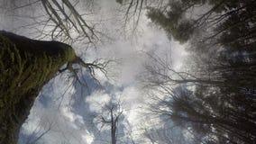 Troncos de árbol cubiertos de musgo del bosque en fondo del cielo nublado azul 4K