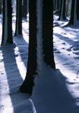 Troncos de árbol del invierno imágenes de archivo libres de regalías