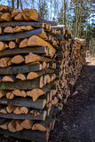 troncos de árbol del Vice-corte Foto de archivo libre de regalías