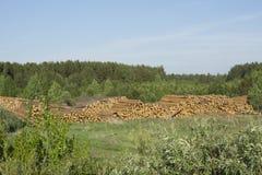 Troncos de árbol derribados Imagen de archivo libre de regalías