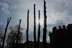 Troncos de árbol en contraluz Imagen de archivo