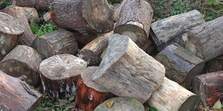 Troncos de árbol en el bosque fotos de archivo libres de regalías