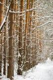 Troncos de árbol en el bosque del invierno que desaparece en el sendero de la distancia Imagen de archivo libre de regalías