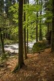 Troncos de árbol en el salvaje Imagen de archivo