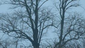 Troncos de árbol en el viento en la oscuridad