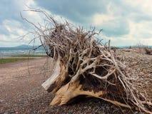Troncos de árbol lavados en tierra Fotos de archivo