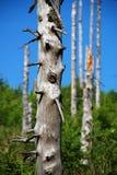 Troncos de árbol muertos Foto de archivo libre de regalías